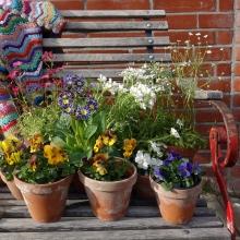 Gartenblumen_erster Einkauf