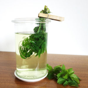 Wildkräuter Tee Brennnessel Giersch Löwenzahn Gundermann